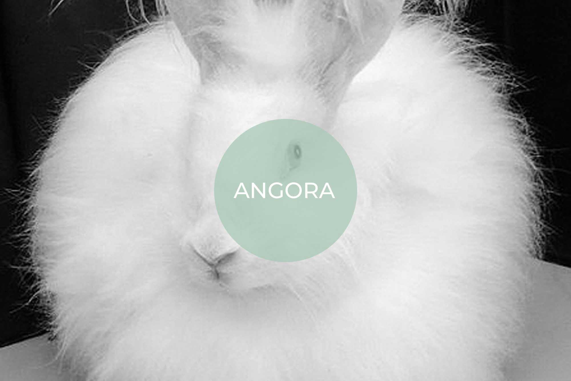 angora its vegan made