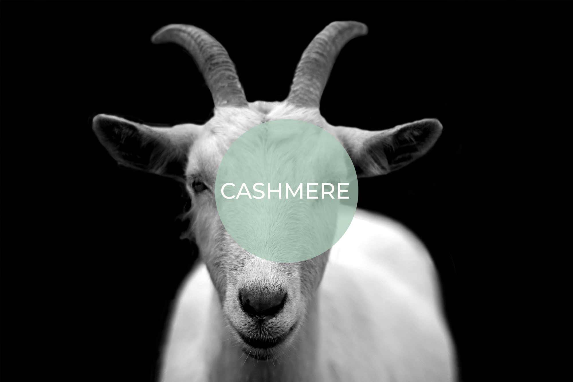 cashmere its vegan made