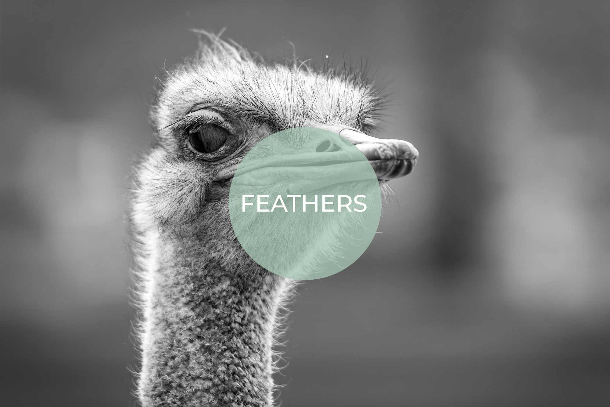 feathers its vegan made