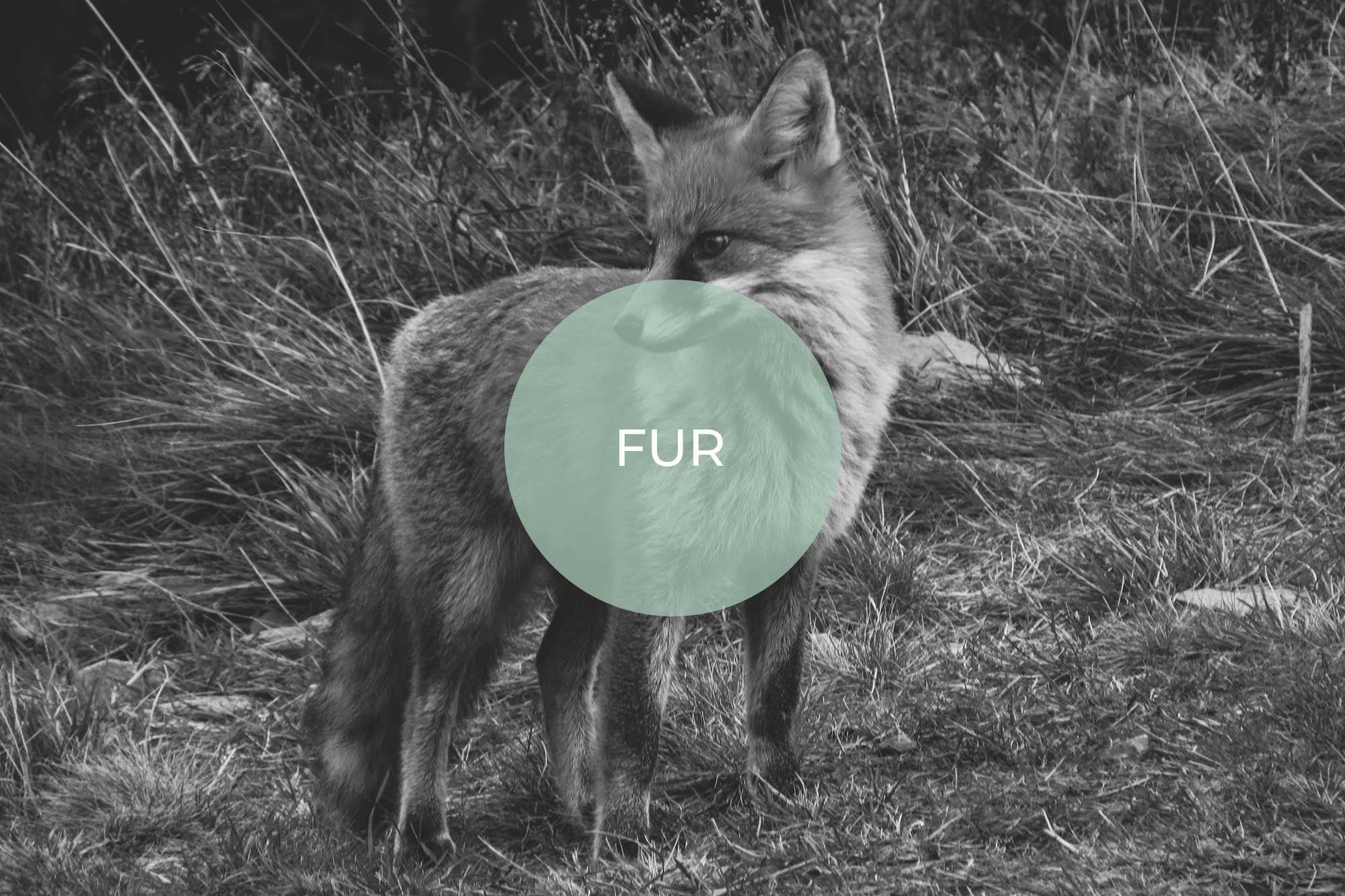 fur its vegan made