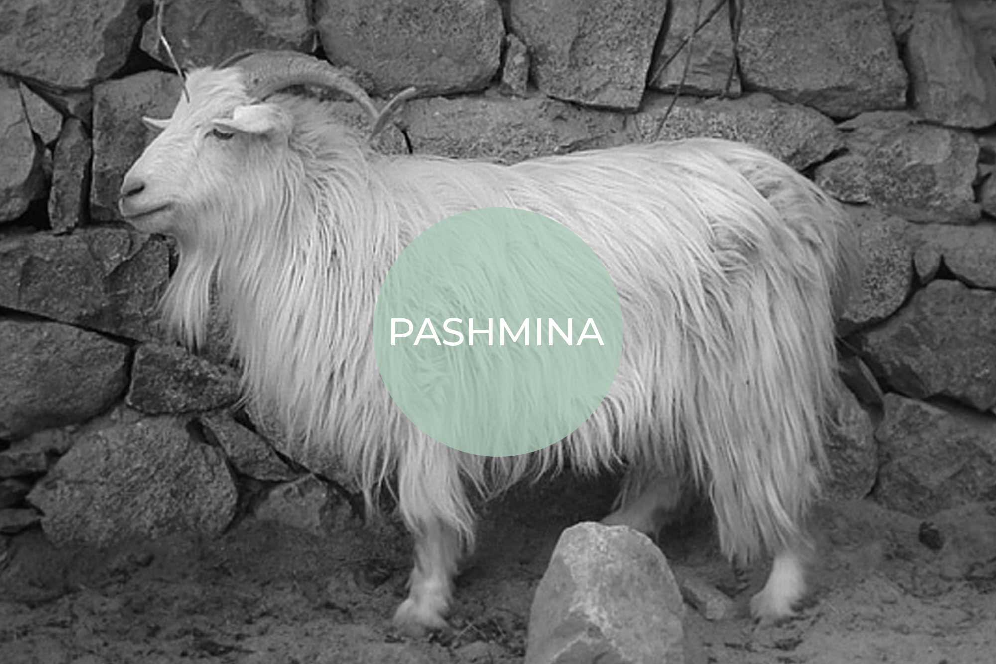pashmina its vegan made