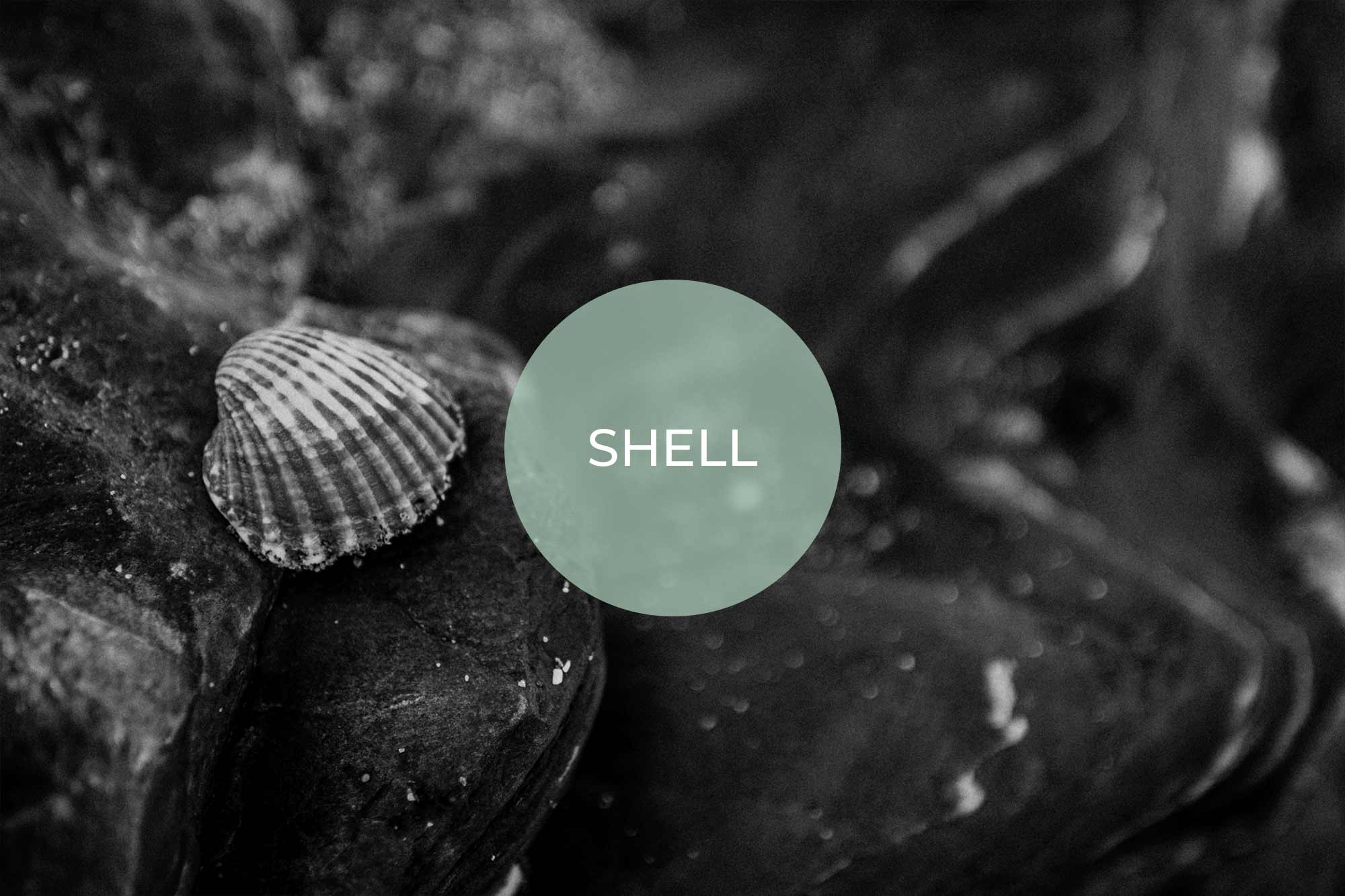 shell its vegan made