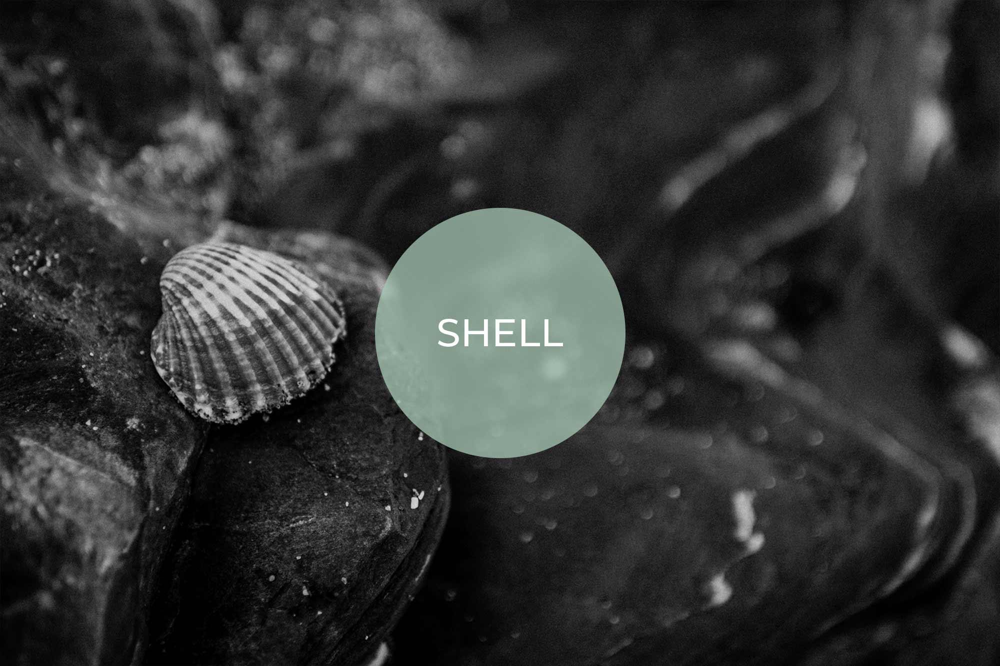 shell its vegan made