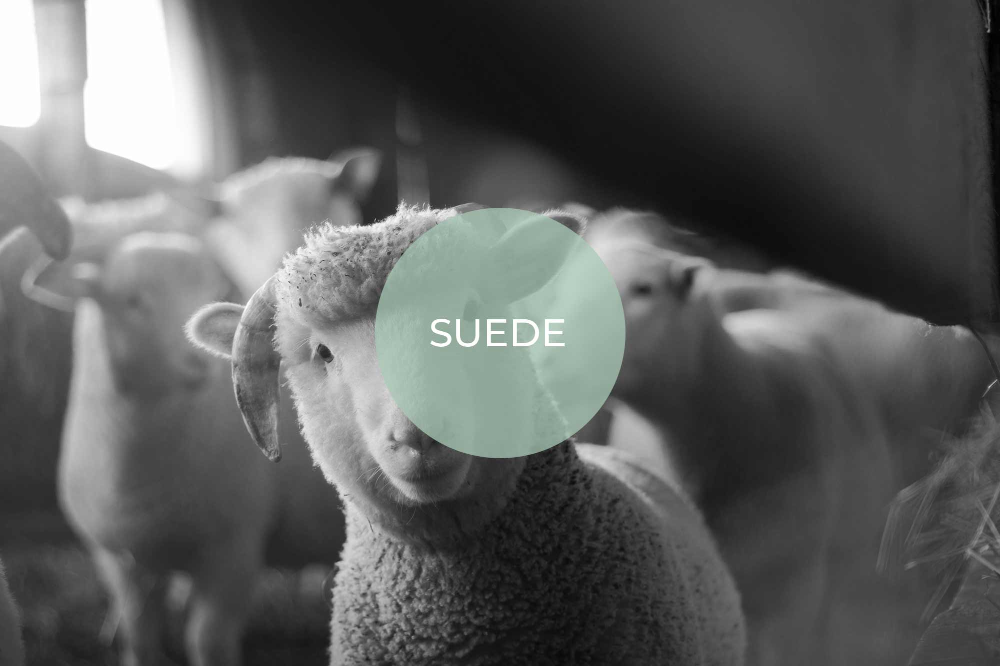 suede its vegan made